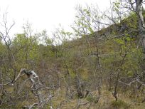 Bergsete opp Kvannaskard-039