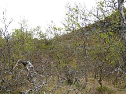 Bergsete opp Kvannskar-039