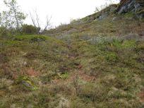 Bergsete opp Kvannskar-040
