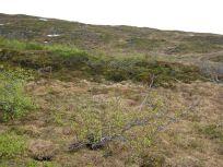 Bergsete opp Kvannaskard-042