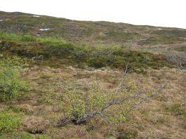 Bergsete opp Kvannskar-042