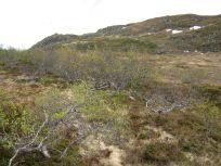 Bergsete opp Kvannskar-043