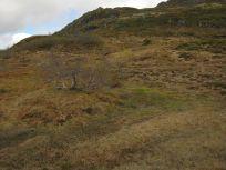 Bergsete opp Kvannskar-046