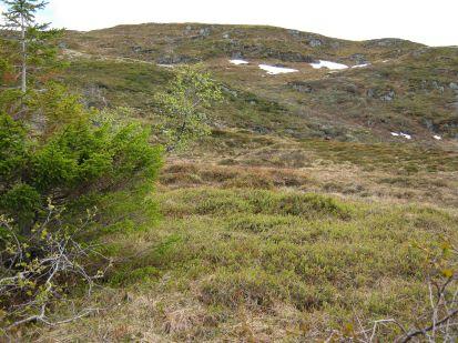 Bergsete opp Kvannskar-047