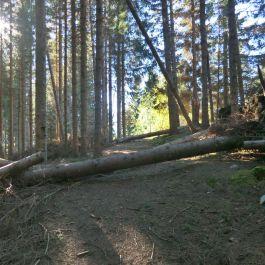Kleppa-Hamrestølen-framme-028