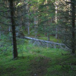 Kleppa-Vålamyri-023
