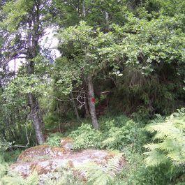 Opp over Kyrafossen-012