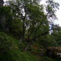 Opp over Kyrafossen-059