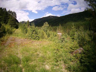 Skogsveg Grindsdalen