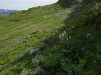 Bergsete via Hangsete-017